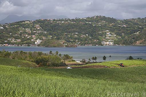 Peninsula de la Caravelle, cerca de TRINITE, al este de la isla de Martinica. Francia. Caribe