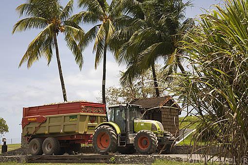 Tractor y remolque pesando la carga de caña de azucar. Destileria de Rhum Depaz. Cerca de ST-PIERRE. Isla de MARTINICA. Francia. Caribe