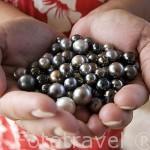 Perlas negras de varias tonalidades. Granja de perlas de Huahine Pearl Farm, en la isla de HUAHINE. Polinesia Francesa. Oceano Pacifico