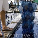 """En piscinas de agua salada mantienen las ristras de jovenes ostras de la especie """"Pinctada margaritifera"""". Gauguin´s Pearl. Atolon RANGIROA. Archipielago de Tuamotu. Polinesia Francesa."""