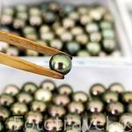 Diferentes clasificaciones de las perlas segun las imperfecciones y redondez de las mismas. Atolon de RANGIROA. Archipielago de Tuamotu. Polinesia Francesa.