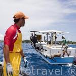 Embarcaciones trabajando con las ostras perliferas frente a las costas del atolon de RANGIROA. Archipielago de Tuamotu. Polinesia Francesa.