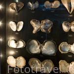 Variedad de ostras perliferas en el museo de Robert Wan. Ciudad de PAPEETE. Isla de Tahiti. Polinesia Francesa.