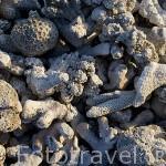 Restos de diferentes corales en una playa del atolon de RANGIROA. Archipielago de Tuamotu. Polinesia Francesa. Oceano Pacifico