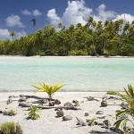 Jovenes palmeras cocoteras desarrollandose en las playas del atolon de RANGIROA. Archipielago de Tuamotu. Polinesia Francesa. Oceano Pacifico