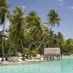 Cabañas y palmeras a lo largo de la costa. Atolón de RANGIROA. Archipielago de Tuamotu. Polinesia Francesa. Oceano Pacifico