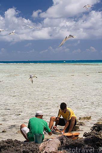 Hombres limpiando pescado. Atolon de RANGIROA. Archipielago de Tuamotu. Polinesia Francesa. Oceano Pacifico