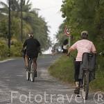 Turistas paseando en bicicleta cerca de la poblacion de AVATORU. Atolon de Rangiroa. Archipielago de Tuamotu. Polinesia Francesa. Oceano Pacifico