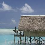 Cabaña con tejado hecho con hojas de palmeras junto a la costa. Atolón de RANGIROA. Archipielago de Tuamotu. Polinesia Francesa. Oceano Pacifico