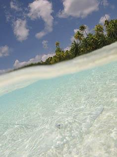 Raya camuflada (Himantura sp.) en las aguas claras del atolon de RANGIROA. Archipielago de Tuamotu. Polinesia Francesa. Oceano Pacifico