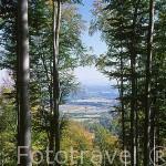 Bosque de hoja caduca. Parque Nacional de Karkonosze. Baja Silesia. Polonia