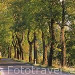 Carretera comarcal cerca de JELENIA GORA. Baja Silesia. Polonia