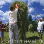 La familia Knapczyk realizando montones de paja dispuesta para secarse durante el verano. Población de DZIANISZ. Zona de Malopolska y montañas Tatras. Polonia