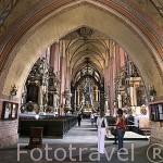 Interior de la iglesia de Sta. Maria Inmaculada s.XIII- XIV. Gotica. CHELMNO. Polonia