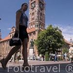 Ayuntamiento con su torre. Ciudad de TORUN, (Unesco). Kuyavia- Pomerania. Polonia