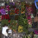 Mercado de frutas, verduras y flores junto al ayuntamiento. Poblacion de CHELMNO. Region de Kuyavia- Pomerania. Polonia