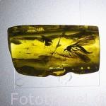 Diferentes insectos capturados en el ambar. Museo del Ambar. Ciudad de GDANSK. Polonia