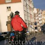 Calle Piwna y ciclista. Ciudad de GDANSK. Polonia