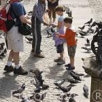 Calle Larga y palomas. Ciudad de GDANSK. Polonia