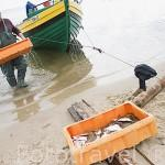 Pescadores desembarcando sus capturas en la playa. Zona de la reserva de KEPA REDLOWSKA. En el barrio de Gdynia. Norte de Polonia