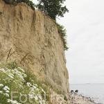 Playa y acantilado de tierra. Zona de la reserva de KEPA REDLOWSKA. En el barrio de Gdynia. Mar Baltico. Norte de Polonia