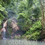 Paisaje de cascadas y aguas termales en la Caldeira Velha, monumento natural. SAO MIGUEL. Azores. Portugal