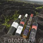 Variedades de vino blanco y tinto de la cooperativa de vino. Basalto, Terras de Lava, Frei Gigante y Verdejo. Isla de PICO. Viñedos Patrimonio de la Unesco. Azores. Portugal
