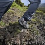 Montañista subiendo hacia el pico de la isla de PICO. (2351 metros,La montaña mas alta de Portugal. Isla de PICO. Azores. Portugal