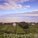 Viñedos (Patrimonio de la Unesco) en la ladera de la montaña. Pueblo de Sao Mateos. Isla de PICO. Azores. Portugal
