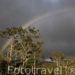 Arcoiris sobre los bosques de la isla de PICO. Azores. Portugal