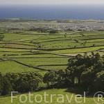Paisaje de campos de cultivo y ganaderia desde la Sierra do Cume. Isla de TERCEIRA. Azores. Portugal