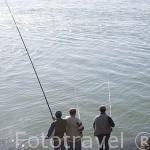 Pescando junto a la desembocadura del rio Duero. Ciudad de OPORTO. Oceano Atlantico. Portugal