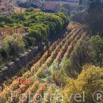 Viñedos en el valle del rio Corgo. Zona del Duero. Portugal