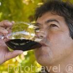 El Sr. J. A. Ribeiro, dueño de la Quinta do Vallado probando un vino tinto de su cosecha. Cerca del pueblo de REGUA y al rio Duero. Portugal