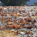 Hojas de arboles en otoño. REGUA. Portugal