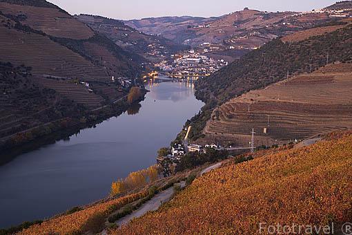 Viñedos junto al rio Duero. Zona de Sima Corgo. Al fondo el pueblo de PINHAO. Portugal