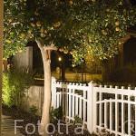 Naranjo en un jardin. Pueblo de PINHAO. Portugal