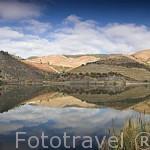 Viñedos en la zona de Cima Corgo y el rio Duero. Portugal