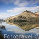 Bancales y viñedos junto al rio Duero. Zona de Cima Corgo. Portugal