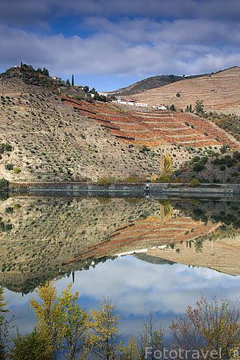 Bancales y viñedos junto al rio Duero. Zona de Sima Corgo. Portugal