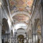 Pinturas en el techo del s.XVIII por Nicolau Nasoni. La Sé catedral del pueblo de LAMEGO. Zona del rio Duero. Portugal