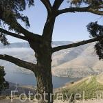 Paisaje de viñedos sobre el rio Duero desde la Quinta do Seixo. En VALENCA DO DOURO. Valle del Duero. Portugal