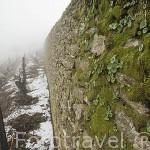 Paredes de piedra y viñedos en terrazas en invierno. Quinta do Seixo. En VALENCA DO DOURO. Valle del Duero. Portugal