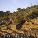 Viñedos en terrazas en el valle del Duero. Portugal