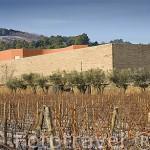 Bodega diseñada por el arquitecto Alvaro Siza y viñedos. Quinta do Portal, cerca del pueblo de CELEIROS DO DOURO. Valle del Duero. Portugal
