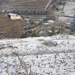 Viñedos nevados. Zona del Alto Douro. Valle del Duero. Portugal