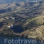 Viñedos y terrazas en invierno. Cerca de la población de PINHAO junto al rio Duero. Valle del Duero. Portugal