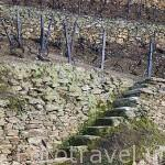Muros de piedra y terrazas parael cultivo de viñedos. Zona del Alto Douro. Valle del Duero. Portugal