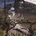 Quinta do Crasto. Zona del Alto Douro. Valle del Duero. Portugal
