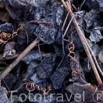 Hojas y ramas secas de viñedos en invierno. Valle del Duero. Portugal